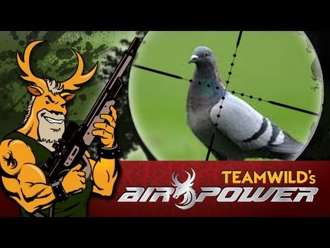 Airgun Hunting: Pigeon Hunt with the Benjamin Marauder