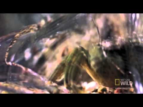 World's Deadliest - Shrimp Packs a Punch - Legendado em Português