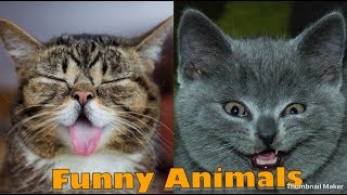 Funny Animals | Hindi dubbed | Talking Animals | Chetan Sehgal Vines - Part 5