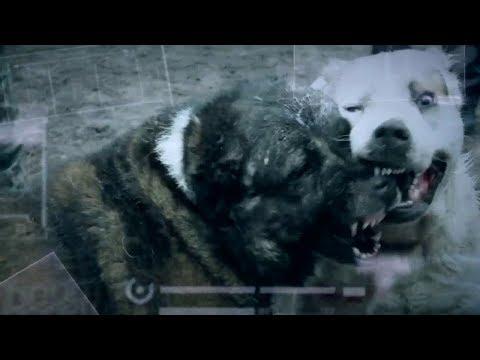 Собачьи бои без правил: безумие богачей - Инсайдер, 08.02.2018
