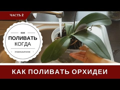 Полив Орхидеи: Как Определить Когда и Как Поливать Орхидеи