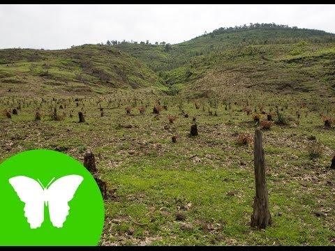 La Eduteca - Los ecosistemas (III): problemas de los ecosistemas