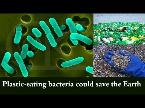 Plastic-eating enzyme