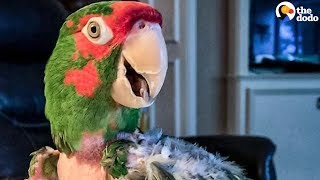 Rescue Parrot Hated EVERYONE Until He Met Her | The Dodo
