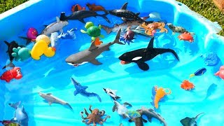 Learn Sea Animal Names with Ocean Shark and Dolphin Toys For Kids