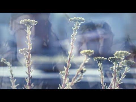 Katona Bálint * Hova tűnt a sok virág