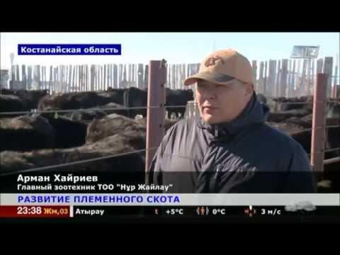 На севере Казахстана успешно развивается животноводство