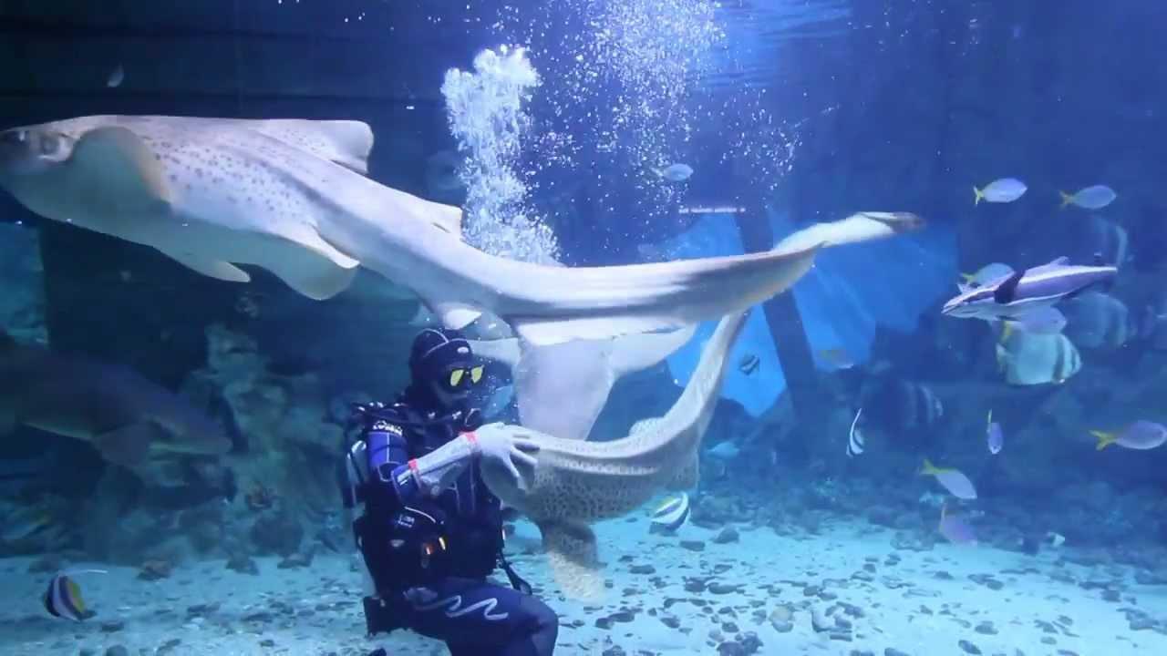 Океанариум в тц рио фото
