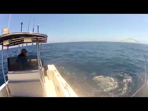 Fly Fishing for Mako Shark