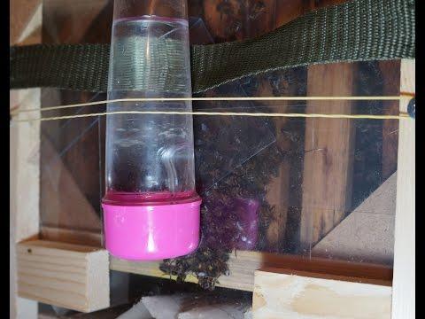 Как напоить, дать витамины и лекарства пчелам в кассетном павильоне. Поилки для пчел. - Смотри все про ремонт