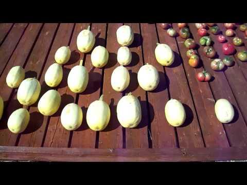 heirloom fruit seeds