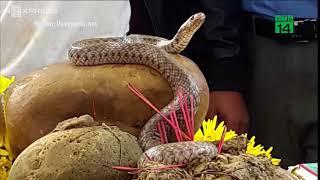 VTC14 | Hai con rắn trên mộ vô danh ở Quảng Bình đã bị bắt
