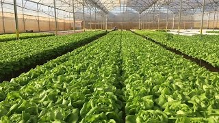 Nông nghiệp sạch số 164 - Rau sạch công nghệ cao (Aquaponics)
