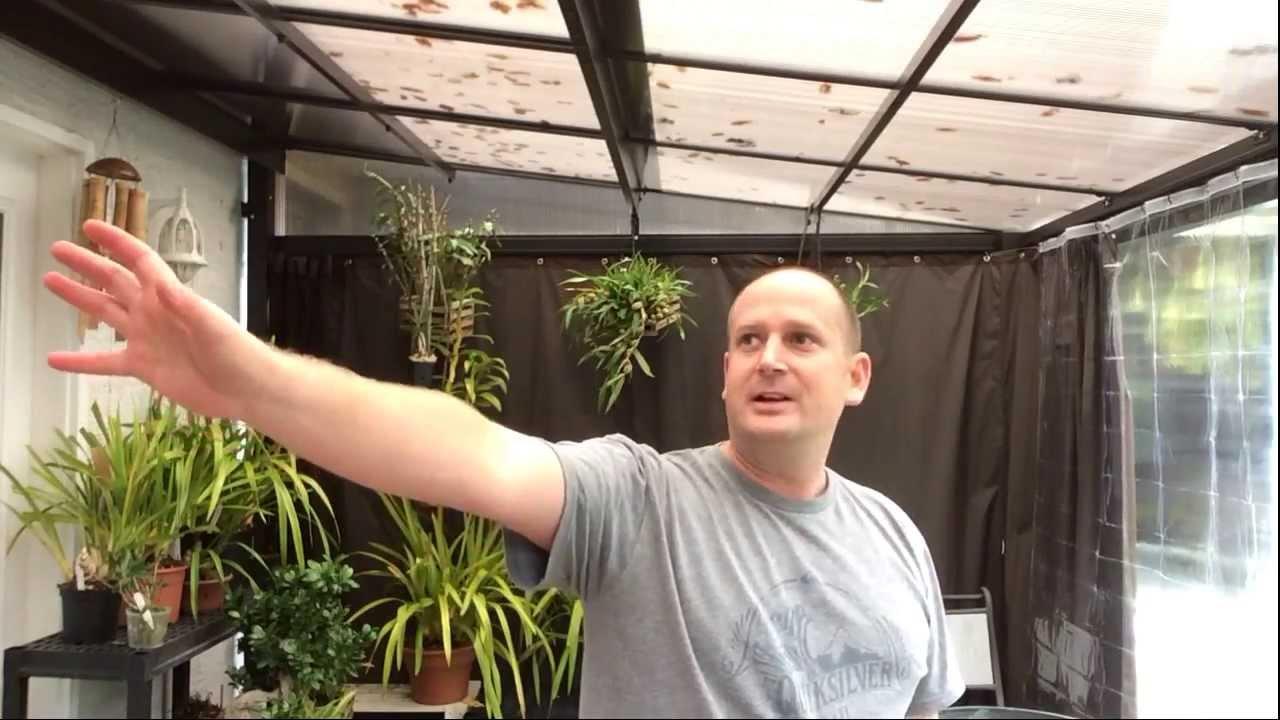 How To Bloom Cymbidium Orchids What Do Cymbidium Spikes