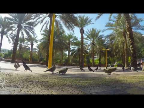 Pigeons Timelapse Dubai 2016 Gopro 4k