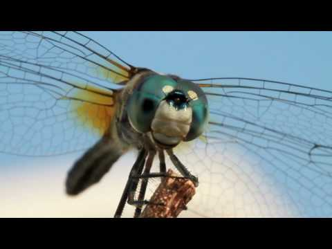 A Moment with Dragonflies
