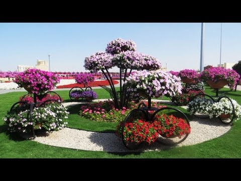 Dubai Miracle Garden  World's Largest Natural Flower Garden, Dubailand
