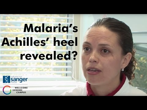 Sanger Institute- Malaria's Achilles' heel revealed?
