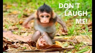 DON'T LAUGH ME ALL DEAR !! Most funny baby monkey Lizza   Lizza itching fly make you laugh.