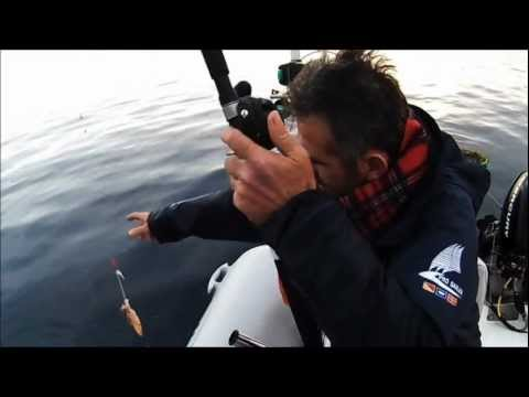 squid snapper  ΚΑΛΑΜΑΡΙΑ ΤΣΑΟΥΣΙΑ ΣΥΡΤΗ ΚΑΙ JIGGING sotos fishing.wmv