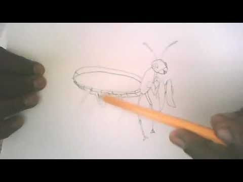 how to draw a simple praying mantis