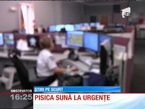 Pisica Care Sună La 911 video
