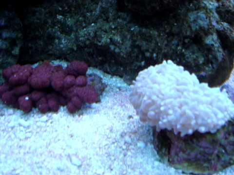 180 Gallon Reef Tank - Positive Vibration Video