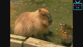 Monkeys Can Be Jerks   Best Funny Videos Compilation   YouTube