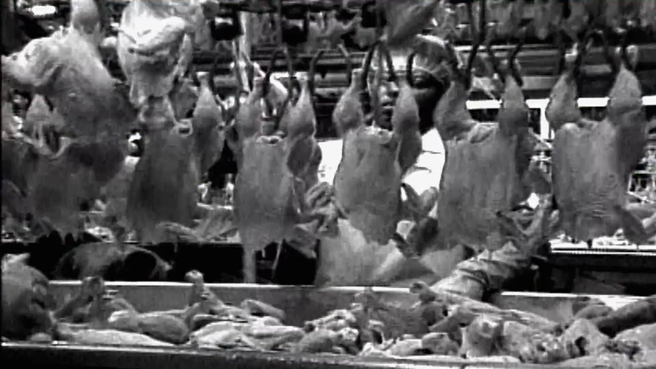 americas food industry in food inc a documentary by robert kenner Movie review - 'food, inc': for health or profit, but not necessarily for both filmmaker robert kenner explores the underbelly of america's food industry.