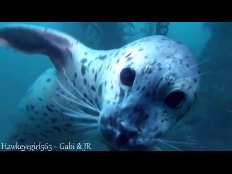 Enya ~ Caribbean Blue ~ Beautiful Coral Reef [HD]