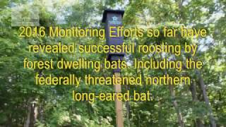 AllStar Ecology: Bats - Rocket Box Emergence (2016-06-15)