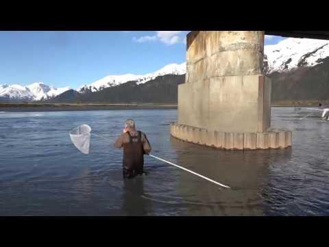 видео ловля корюшки на сачок