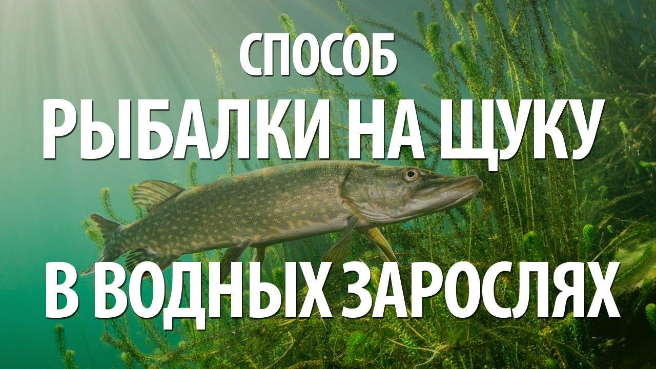 Стульчики для рыбалки