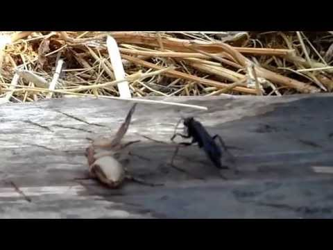 how to get rid of wasps outside your home