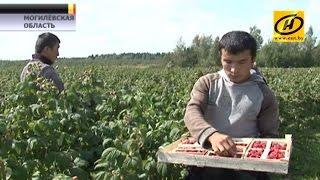 Как заработать валюту на белорусских яблоках, картошке и малине?