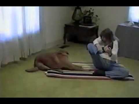 ポーズを決めて得意顔!飼い主さんにヨガポーズのお手本を見せる犬