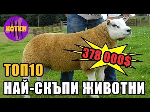 Топ 10 най-скъпи животни на света