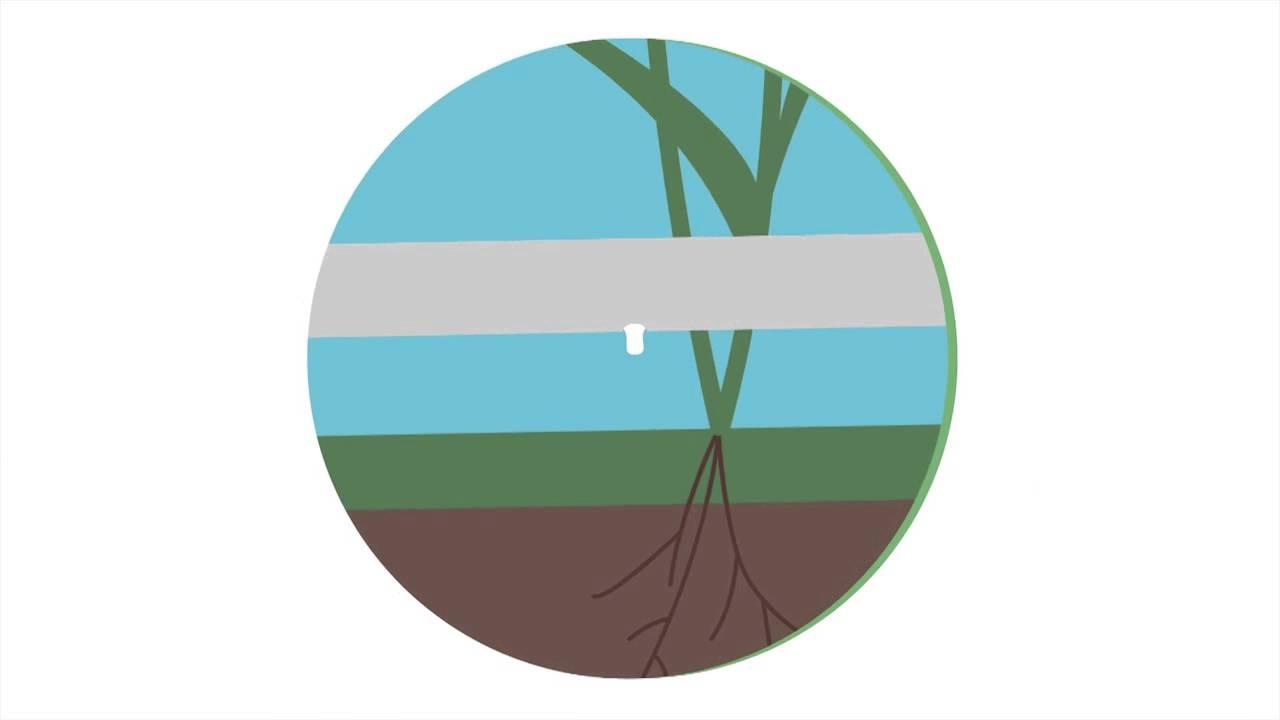 for Netafim irrigazione
