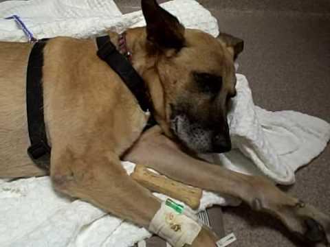 LNF Dog Rescue's Freddie Had To Say Good-Bye 5-21-09