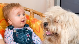 Funny Babies Talking to Dogs Compilation 2014