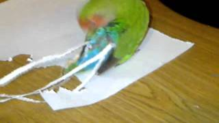 РАЗМЕРА има значение! Даже при папагалите!!!