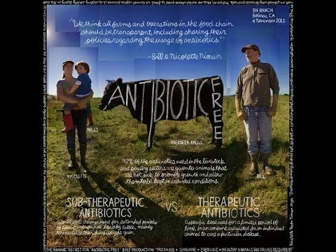Antibiotic-Free | The Lexicon of Sustainability | PBS Food