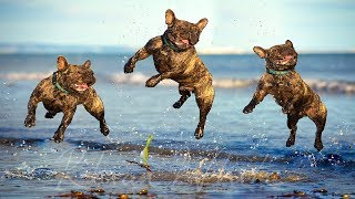 Funny Dogs Playing at the Beach Compilation NEW