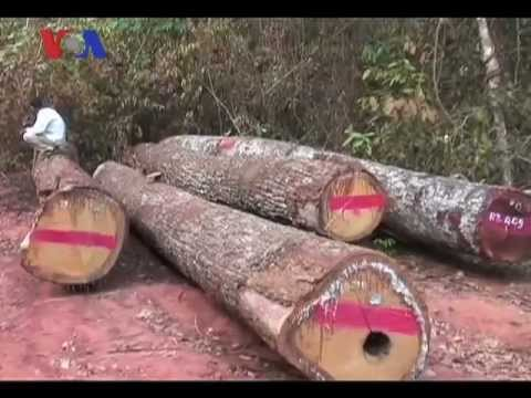 Illegal Logging And The Murder Of Activist Chut Wutty - Voa Khmer Report video