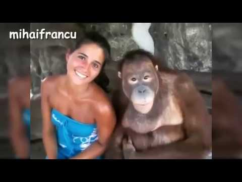 Funny Monkey Videos Compilation 2016   مقاطع مضحكة للقردة، لن تصدق