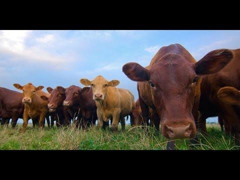 Understanding Antibiotics in Meat   Potluck Video