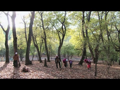 Kyrgyzstan – Standing Tall