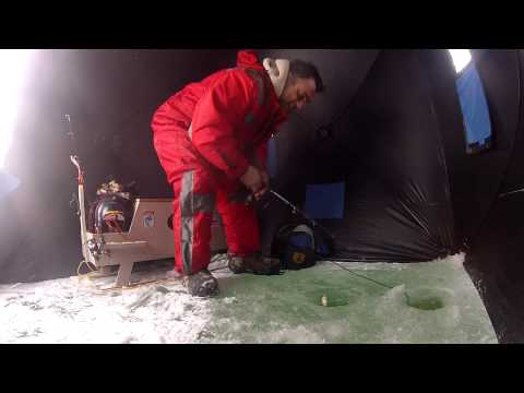 Ice fishing perch on Cooks bay, Gilford, Lake simcoe.