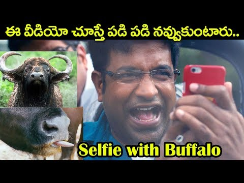 Selfie With Buffalo | Vennela Kishore Comedy Scenes | Volga Videos