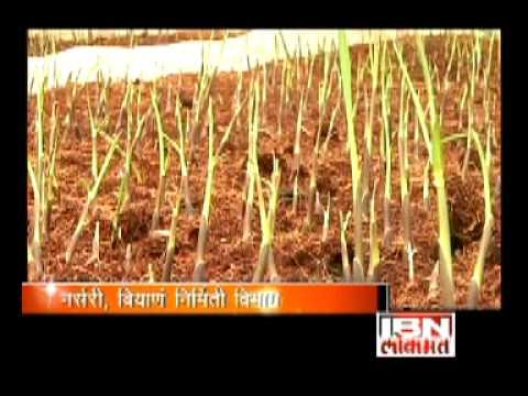 Agricultural Development Trust, Baramati.mpg